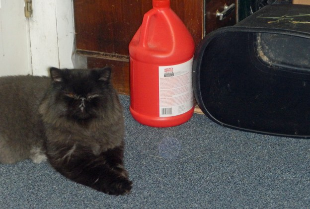 Dougy took up a spot clsoe to the cat cave.  (He really, really wanted to go in, but Andy was watching from nearby!)