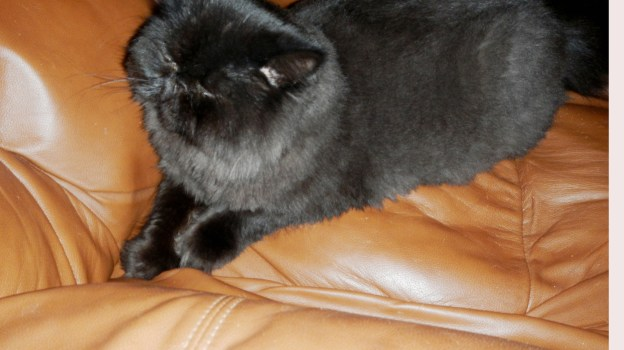 """Maybe I can hide on thew recliner..."" Dougy tries to disappear from the naughty photographer!"
