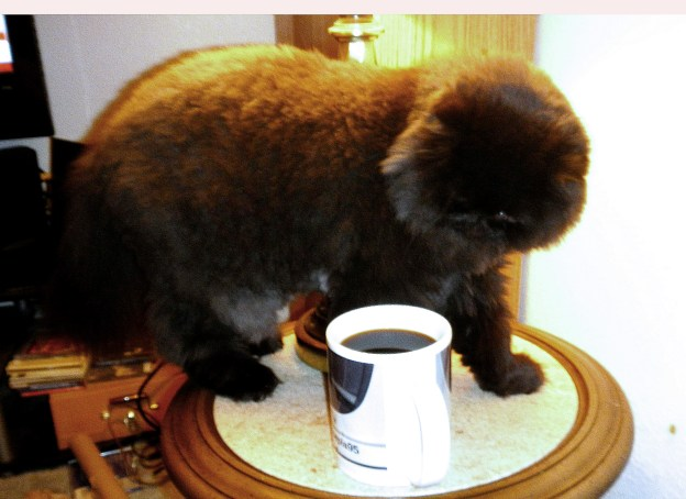 Dopug tries to discourage Dougy by putting his coffee on the light stand.