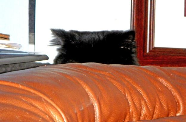 Hiding behind the recliner, a dark presence...