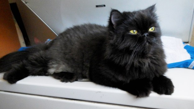 Andy, relaxing on the washer, one of his favorite haunts.
