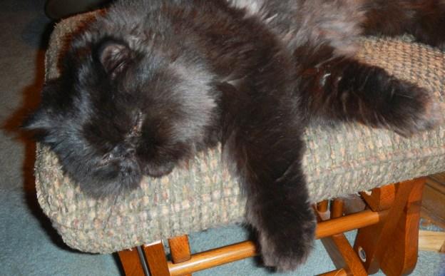 La! La! La! Dougy rests on his ottoman! Life is good!