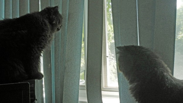 """The boys agree: """"Most satisfying, Andy! Thanks for the heads up!"""" Back to spider watching."""