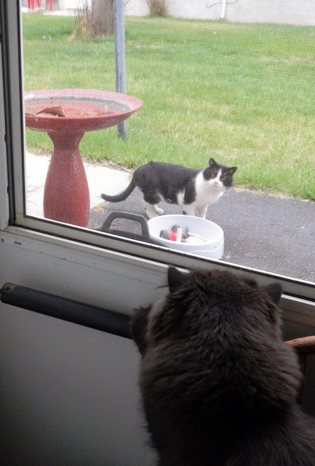 My kitties were fascinated by Taco, yet afraid at the same time. Taco was a tough little cat!