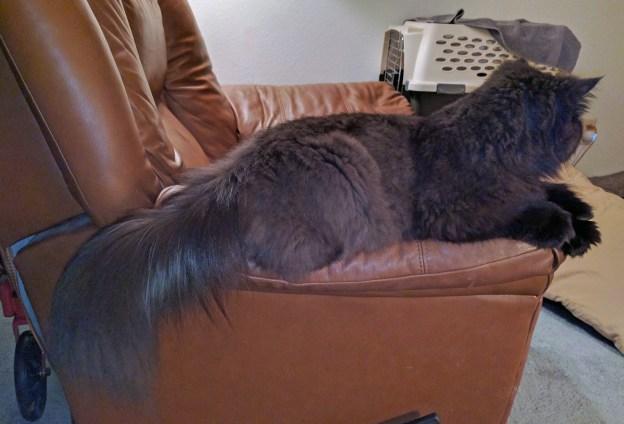 La! La! La! Andy enjoys a little recliner arm rest.