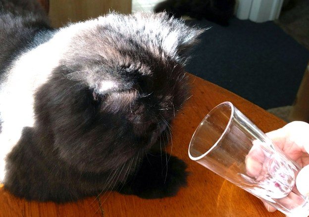 91616 andy sniffs wine glass.jpg