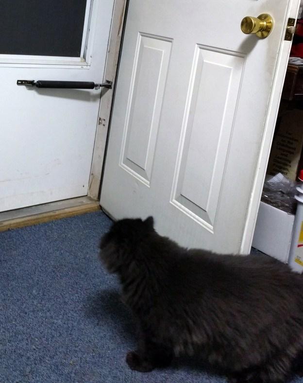 102816 dougy contemplates open door.jpg