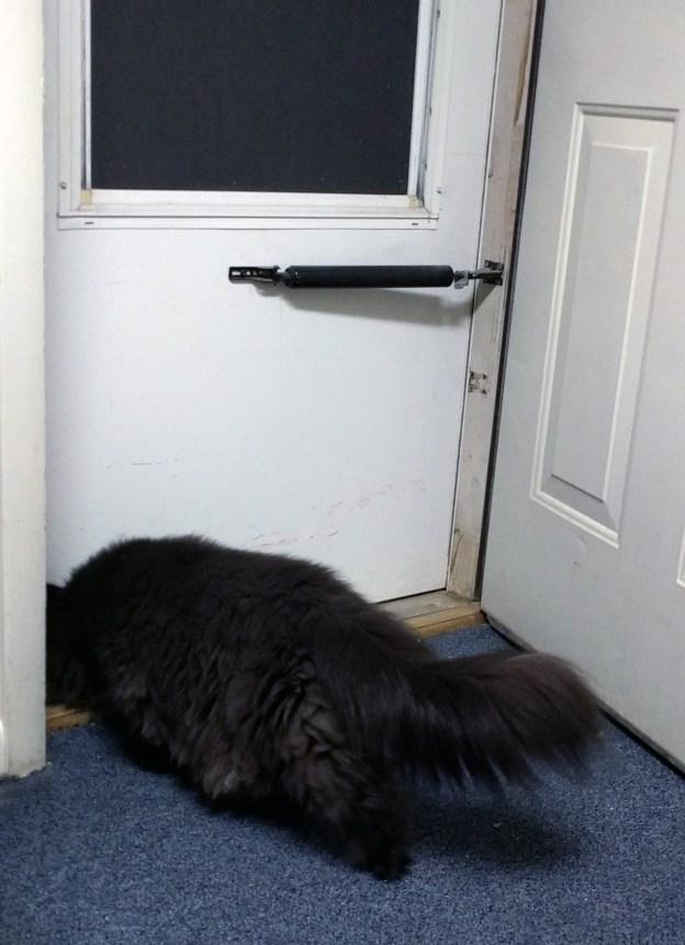102816 dougy sniffs at door.jpg