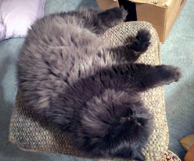 103016 dougys tummy recliner.jpg