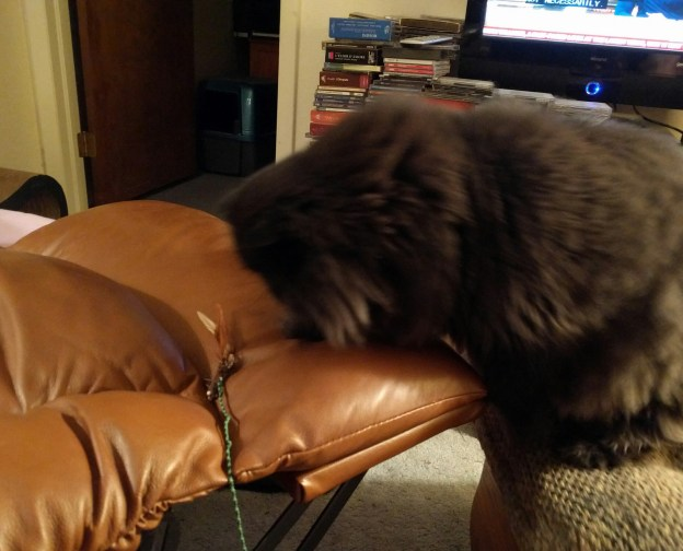 111716 dougy sniffs wand toy on reecliner footrest.jpg