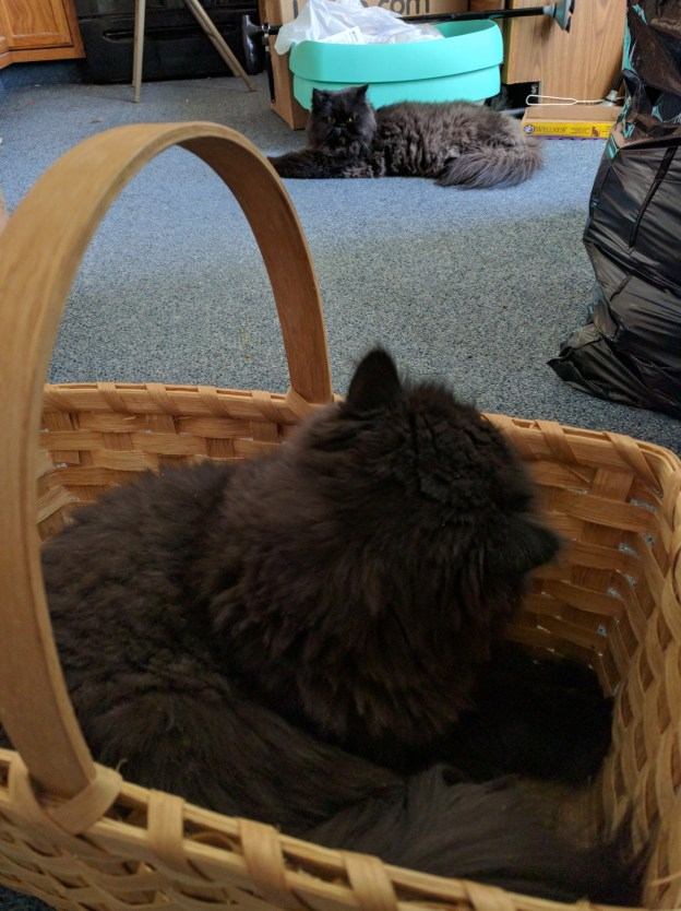 Still there. It must be a plot to take the basket. Doubtlessly!