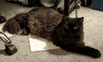 """I'm a kitty. No need for this silliness, but the paper is just right for a rest!"""