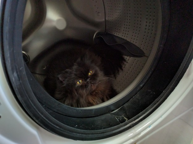 Andy's new den. (Don't worry. I know better than to toss clothes in the washer without first checking for kitties!)