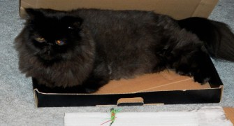 dougy in box 2.