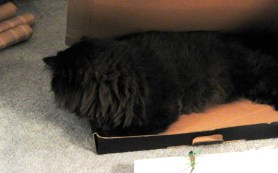 dougy in box 5