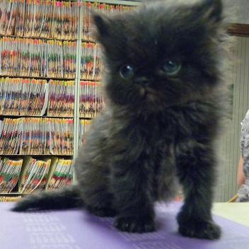 andy as kitten