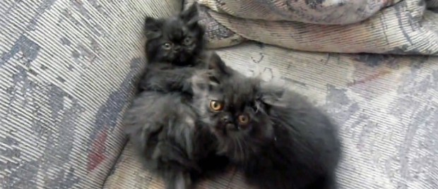 andy left dougy right as kittens