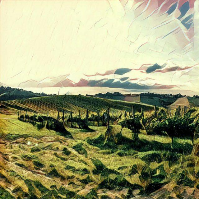 prisma_vinyard_1