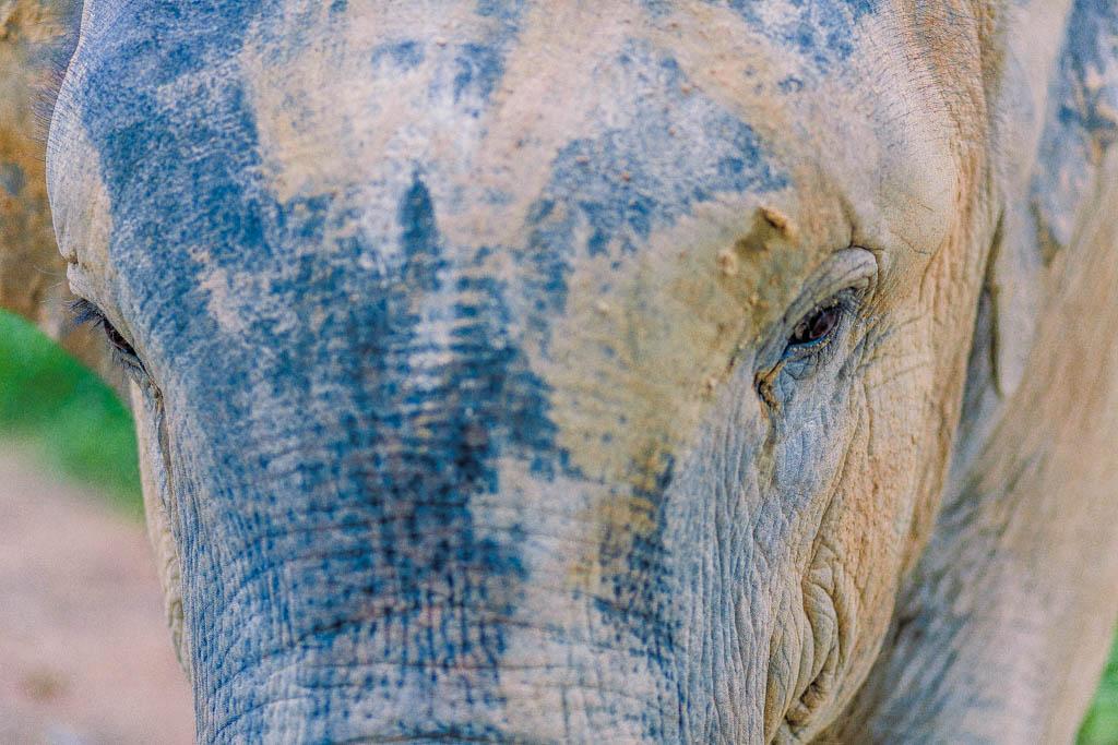 Our Own White Elephant Phang Nga Elephant Park