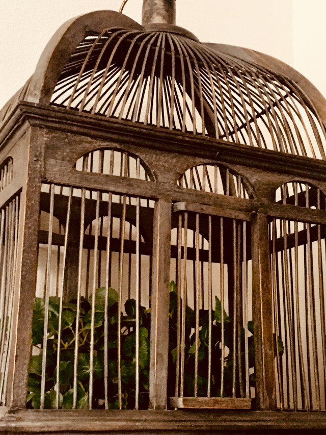 Bird cage with plant growing inside