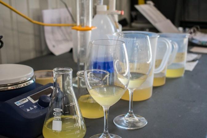 White_Wine_Lab.jpg