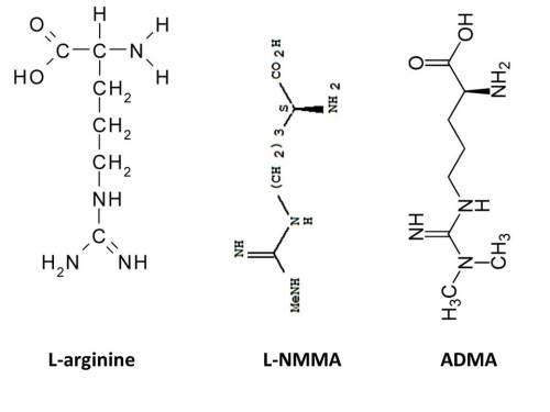 endogenous NO inhibitors from pubchem