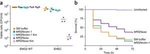 ΦRGN particles elicit sequence-specific toxicity against enterohemorrhagicE. coli in vitro andin vivo.