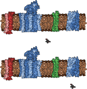 role of solute carriers and other transporters in cellular drug uptake