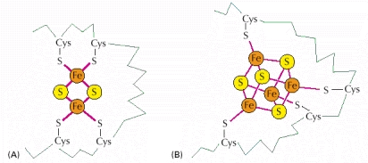 structure of iron sulfur centers ch14f23