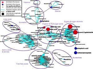 Human gut microbiome