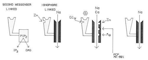 Three Classes of Glutamate Receptors