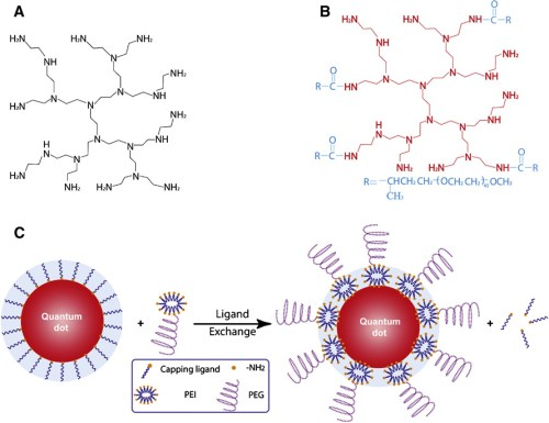 Encapsulation and solubilization of core-shell CdSe-CdS-ZnS quantum dots  nihms62165f3