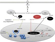 Metabolism can directly influence gene expression programs
