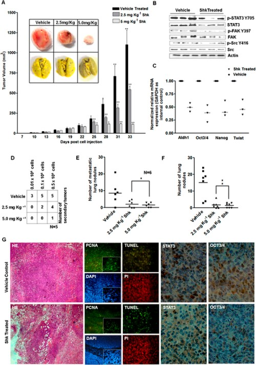Shk inhibits breast cancer growth, tumorigenicity and metastasis in vivo
