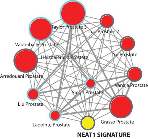 Cornell_graphics1_Neat1Signature1436235247