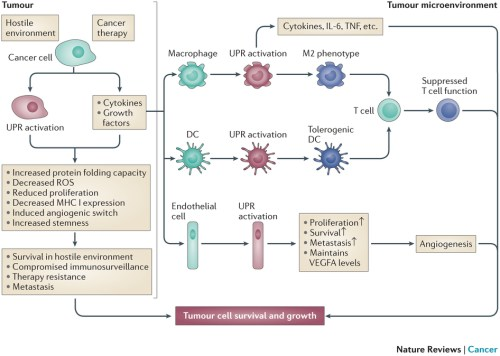 cancer-supporting role of the unfolded protein response