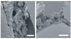 Microfluidic device-2
