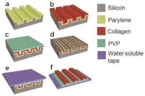 Tissue engineering-1