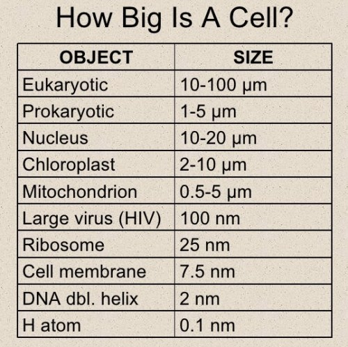 How big is a CEll