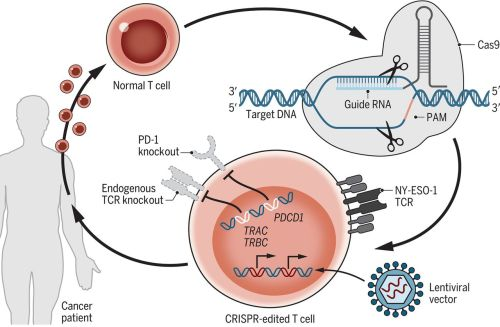 Crispr takes on human trials from UPenn trial Crispr edited T cells