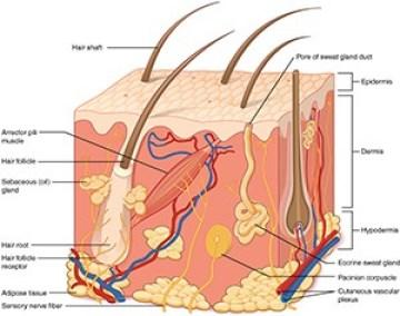 vitamin c serum helps collagen in skin