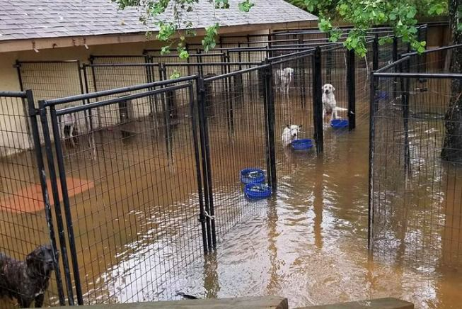 flooding_dogs_tall_tales_rescue.jpg.653x0_q80_crop-smart
