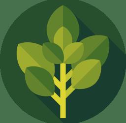 Common Herbs for Eczema Treatment