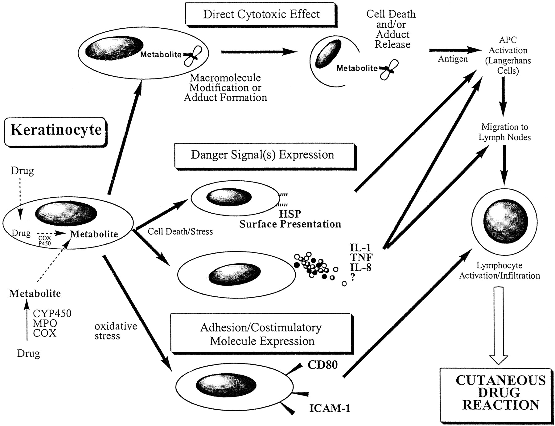 Cutaneous Drug Reactions