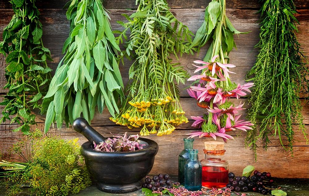 Herbal Uses and Healing Properties