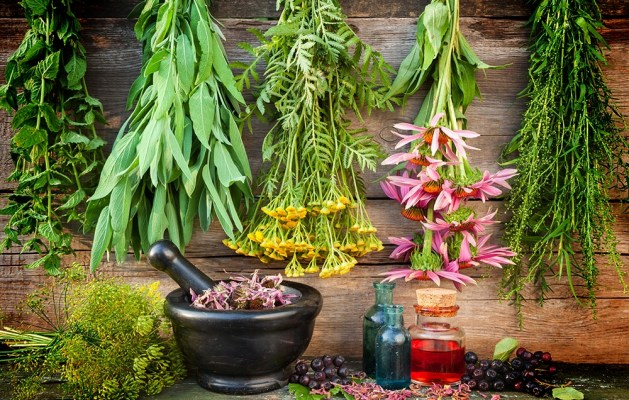 Herbal Uses and Healing Properties