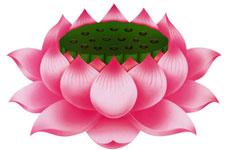 https://i2.wp.com/phathoc.net/UserImages/2010/02/23/1/lotus1_jpg.jpg