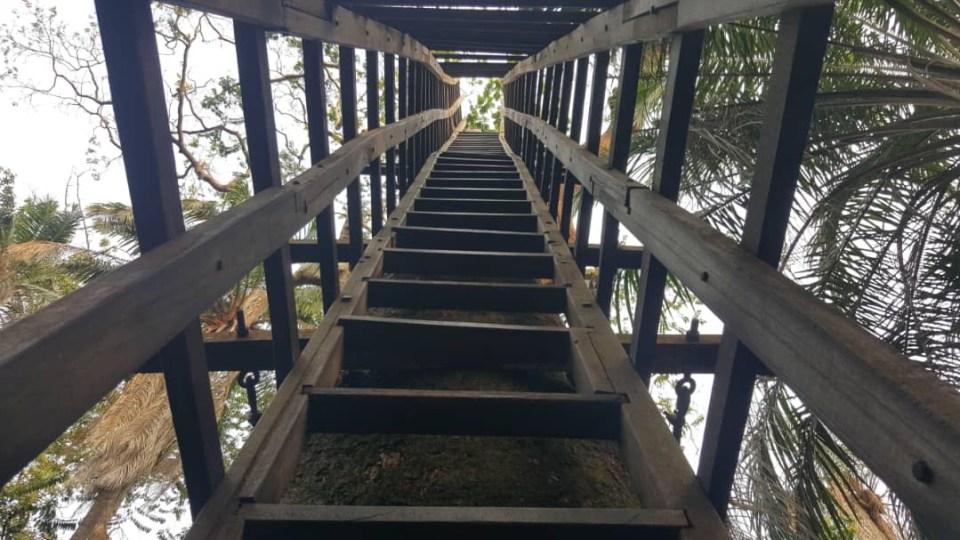 Lekki Conservation Centre Longest Canopy Walkway Africa