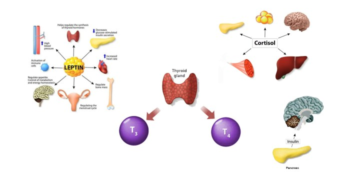 HB5 Reviews-five particular hormones