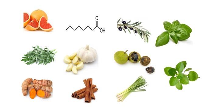 Fungus Hacks Ingredients